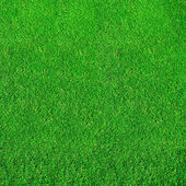 Extremely green grass — Stock Photo