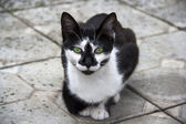 Cat of black-and-white color with green eyes. — Stock Photo