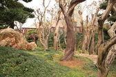 Dry trees — Stock Photo