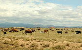 Fazenda de gado. — Foto Stock