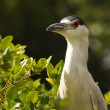Wild heron in Florida - Stockfoto