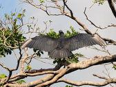 Sęp na drzewie — Zdjęcie stockowe