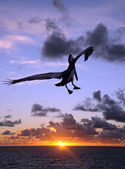 Pelican at sunset — Stock Photo