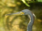 Heron head — Stock Photo