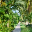 Path with tropical trees - Stock Photo