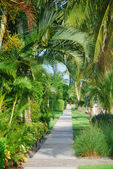 Path with tropical trees — Stock Photo