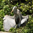 Great blue heron — Foto Stock #11642627