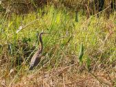 Paysage des everglades — Photo