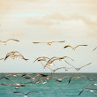 Stock Photo: Seagulls on the beach
