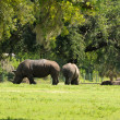 Stock Photo: Rhinos resting