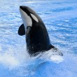 Killer whale — Stock Photo #11801749