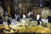 Group of penguins — Stock fotografie