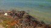 Ramos secos, ao lado do lago — Foto Stock