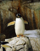Penguin in the wild — Stock Photo