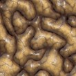 Brain matter — Stock Photo #11904260