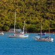 Sailboats on the coast — Stock Photo