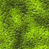 Green organic matter — Stock Photo