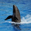 Dolphin in water — Foto de stock #11922694