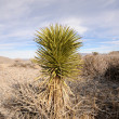 Stock Photo: Desert vegetation