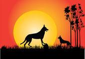 Dingo in the sunset — ストックベクタ