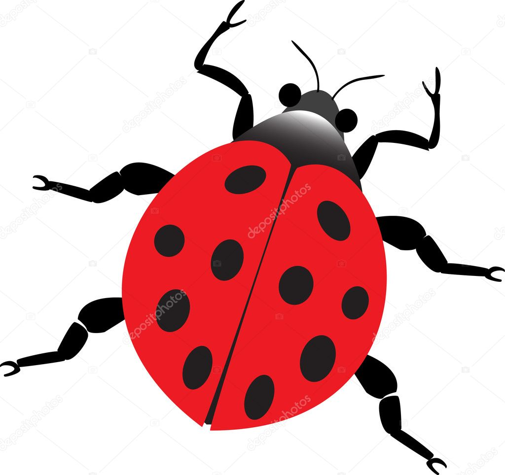 Asian Lady Beetle | Extermital Termite and Pest Control