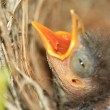 Baby bird — Stock Photo