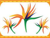 Bird of paradise flower — Stock Vector