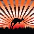 Kangaroo sunset — Stock Vector