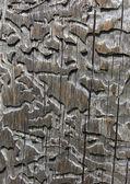 Konsistens av trä — Stockfoto