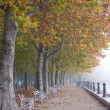 Stock Photo: Foggy autumn
