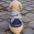 Well dressed dog — Stock Photo #11986891