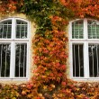 Stock Photo: Autumnal foliage