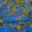Blue - yellow contrast - Stock Photo