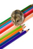 Pet ve kalemler — Stok fotoğraf
