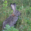 Rabbit in a grass - Stock Photo