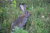 Rabbit in a grass — Stock Photo