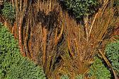 Plant texture background — Stock Photo