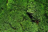 充满活力绿叶背景 — 图库照片