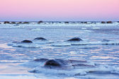 Frosty sea — Stock Photo
