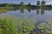 Elbe-fluss in tschechischer sprache — Stockfoto
