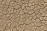 Dry cracked desert ground — Stock Photo