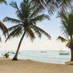 Palms On The Tropical Beach — Stock Photo