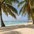 Palms On The Tropical Beach — Stock Photo