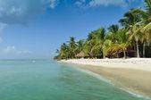 Saona eiland strand — Stockfoto