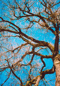 Ramous Tree Branches — Stock Photo