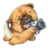 A little dog holding a camera — Stock Photo