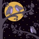 nacht-vögel — Stockfoto