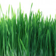 Green Grass Panorama Seamless Tile Tiling Repeating Isolated — Stock Photo