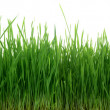 Green Grass 67 Megapixel Panorama Seamless Tile Tiling Repeating Isolated — Stock Photo #12402795