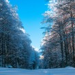 Forest path in winter time with blue sky above — Stockfoto #11848878